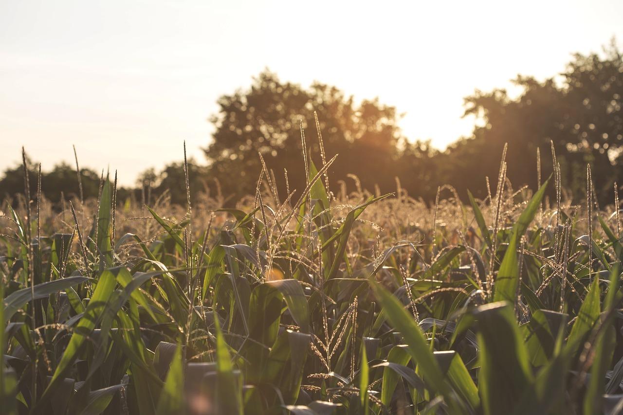 Embrace the future of farming
